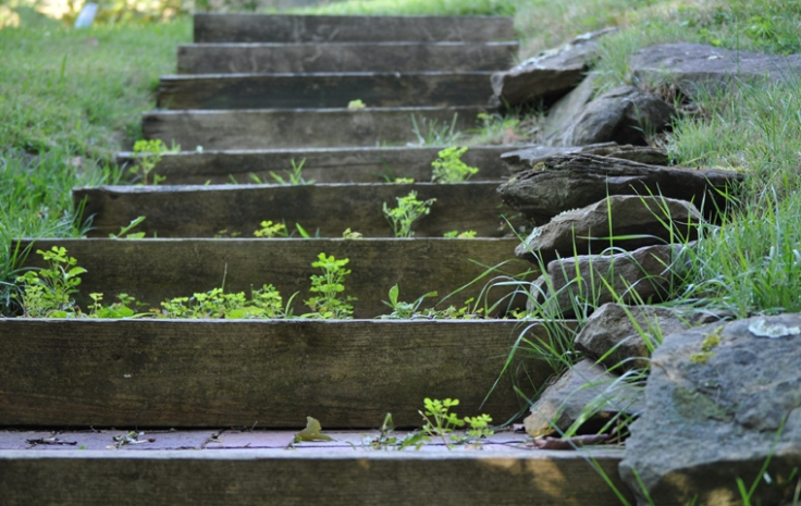 Garden Steps for web