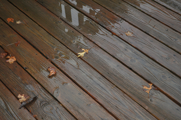 rain-for-web